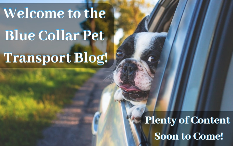Welcome to the Blue Collar Pet Transport Blog