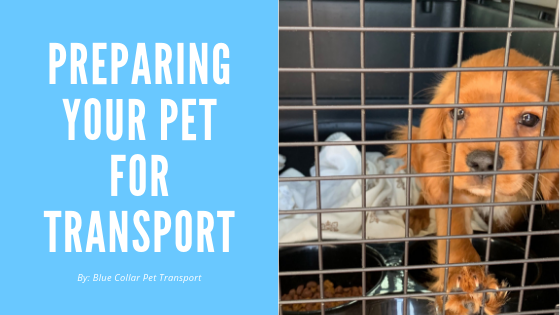 Preparing Your Pet for Transport