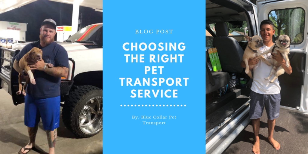 Choosing the Right Pet Transport Service
