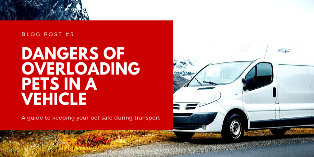 Dangers of Overloading Pets in a Vehicle
