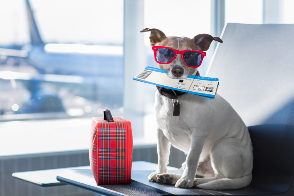 Dog with sunglasses and boarding pass at airport.
