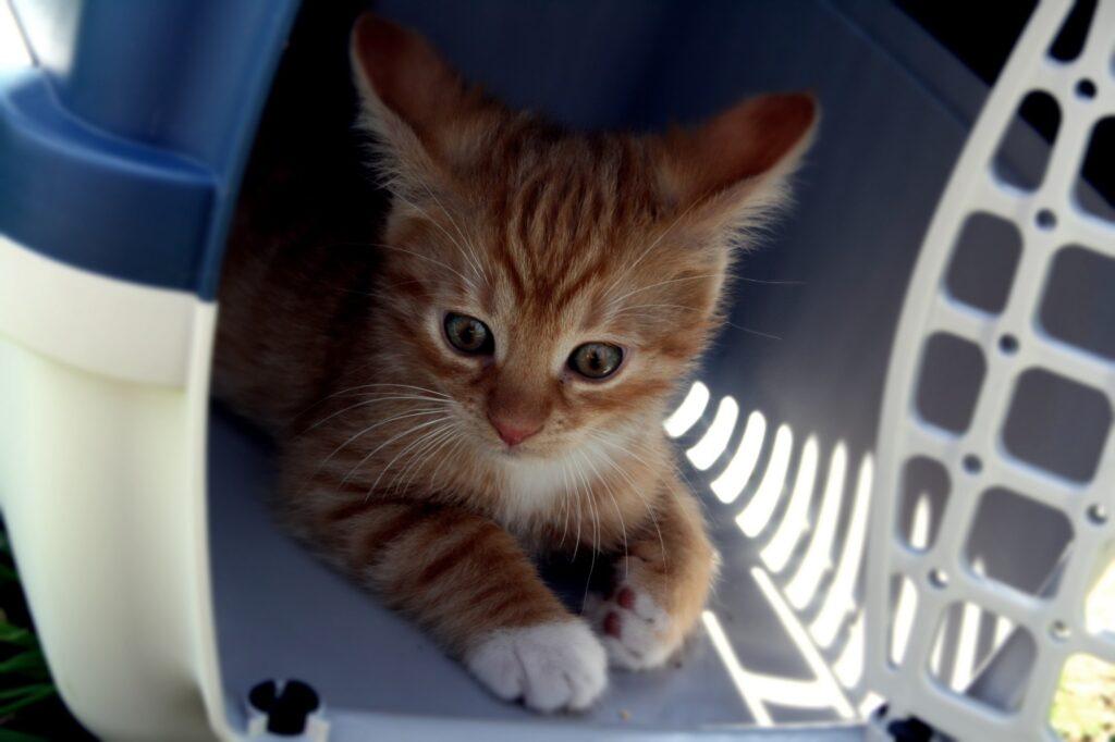 Kitten inside crate.
