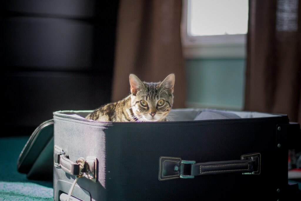 Kitten inside suitcase.