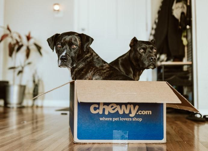 Two black dogs in a chewy box.
